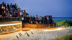 Phillip Island - Penguins, Koalas & Wildlife