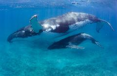 Humpback Whales Interaction