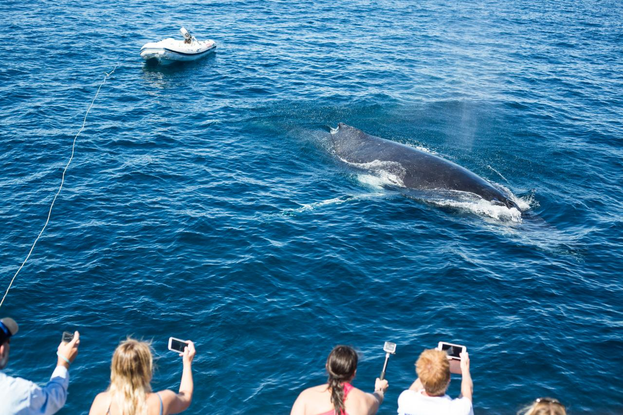 Whale Sharks & Whale Watching - ECO  TOURS - SEPT - NOV- 2021