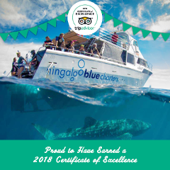 Ningaloo Blue Eco Tours - From 31st August to 30th November