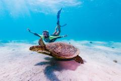 Ningaloo Wildlife Tours - Ningaloo Reef!