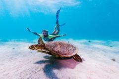 Ningaloo Wildlife Tours - Ningaloo Reef!