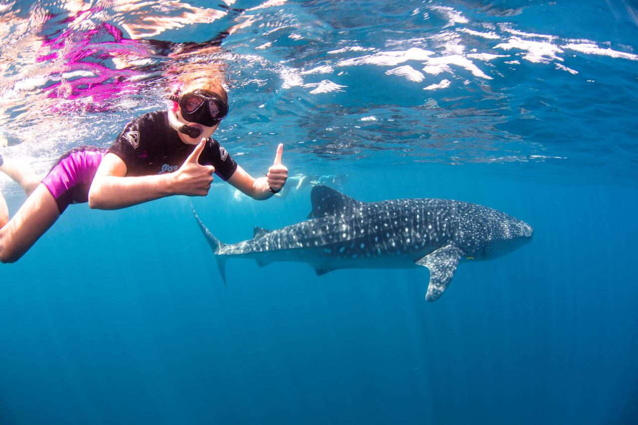 Swimming with Whale Sharks -  March to 31 August 2021