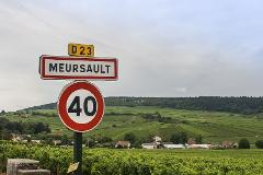 Walking through Burgundy vineyards