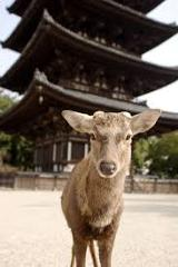Nara Full Day Luxury Excursion by Helicopter Roundtrip