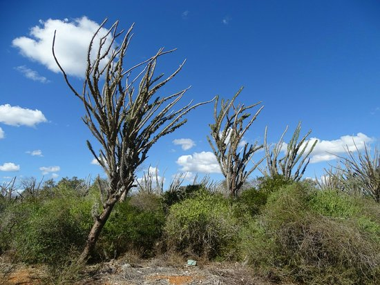 Full Day Tour - Antsokay Arboretum and Reniala Reserve