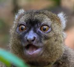 Madagascar Lemurs Tour