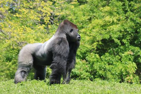 Brazzaville - Lesio Louna Natural Reserve Gorillas - Bela Falls