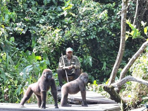 Congo Gorillas and Louna National Park full day tour
