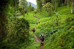Kokoda Trail Tour Package - Best Value Kokoda Trek in PNG