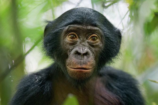 Eco-Excursion to Lola ya Bonobo Sanctuary