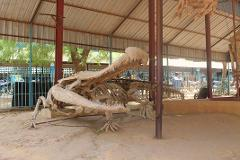 Niamey and Niger - City, Culture, and History Day Tour