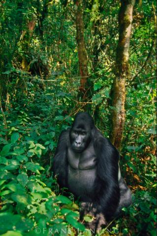 Kahuzi Biega National Park Safari - Wild Gorillas and Chimpanzees - Luxury Lodges