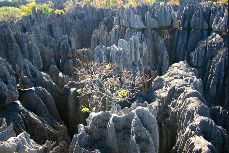 Baobab Avenue and Bemahara Tsingy (Tsingy de Bemahara) Tour (West) with Kirindy Forest Reserve