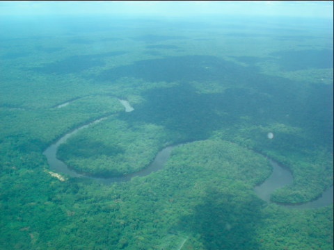 Salonga National Park Expedition From the Congo River: Deep Rainforests of DRC (Including Kinshasa, Malebo/Stanley Pool Cruise to Kinkole, and Bonobos Tours)