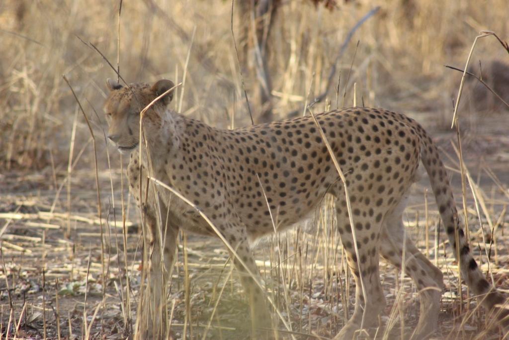 W National Park Safari 5 Day