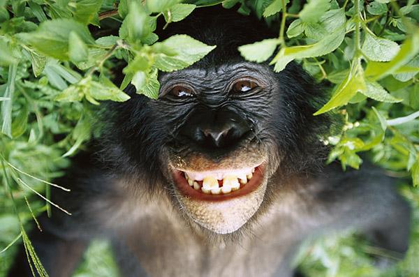El festival de cine porno que pretende salvar a los bonobos