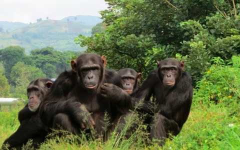 Kahuzi Biega National Park - Budget Tour
