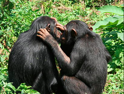 Jane Goodall's Chimpanzees Tour at Lwiro - Permit and Food Included