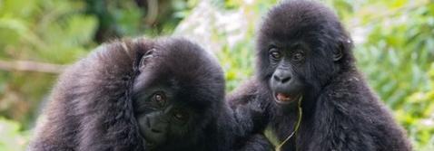 Odzala-Kokoua National Park Adventure Eco-Tourism Program 2017-18 - Affordable & Amazing Congo Safaris For Everyone