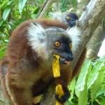Jewels of Madagascar