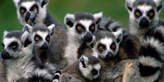 ANNUAL GROUP DISCOUNT TRIP: Great Madagascar Rainforests Road Tour (10 days - June 15-25, 2015)