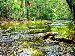 Rainforest Ride