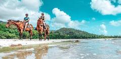 Mid morning Beach Horse Ride