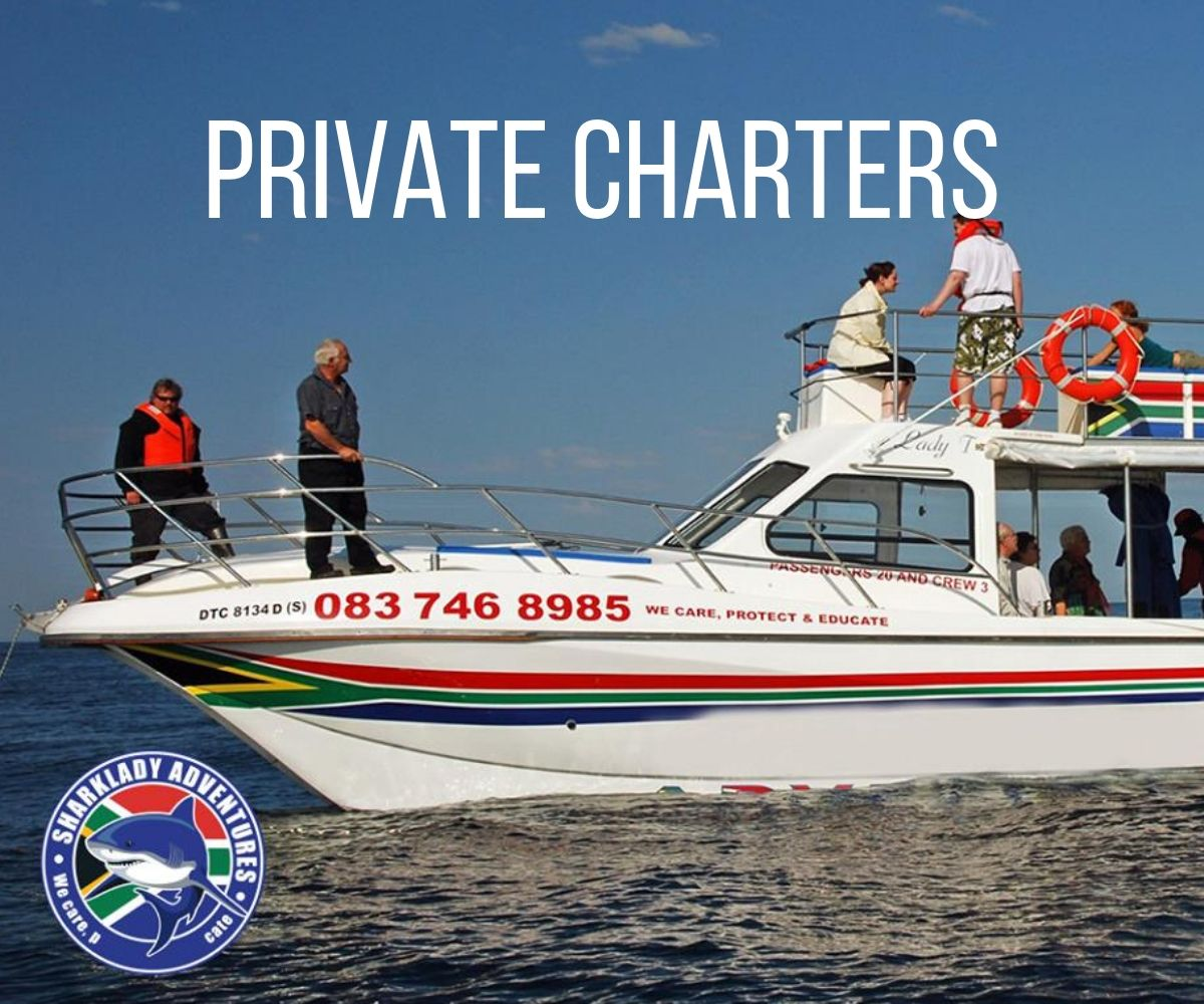 Private charter - shark cage diving