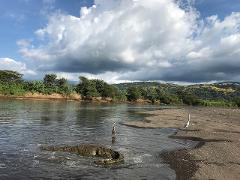 CROCODILE SAFARI + ZIPLINE CANOPY SHORE EXCURSION FROM CALDERA & PUNTARENAS