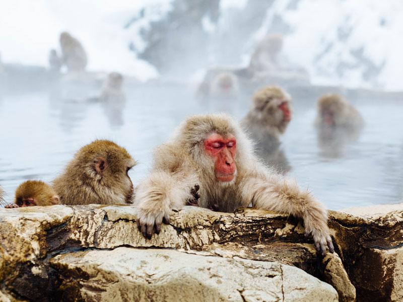 Japan 10 Day Ski Trip