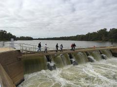Wetlands and waterways of Mildura and Murray River Tour and or Mildura to Wentworth.