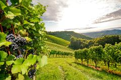 2-Day /  Willamette Valley 'Founders Wine Tour Experience'