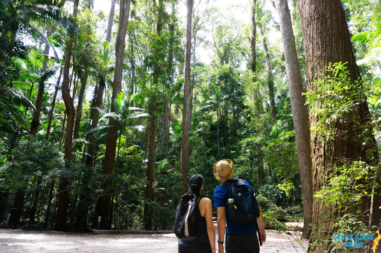 Pack-free Accommodated: Best of the Great Walk - 3D/3N