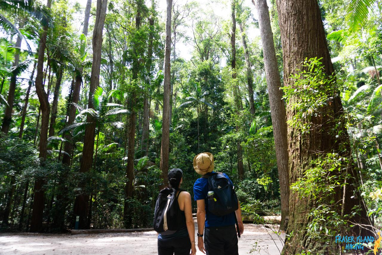 Pack-Free Camping: Rainforest Eco Hike – 3 Days
