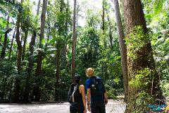Pack-Free Camping: Rainforest Eco Hike - 3 Days