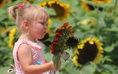 Farmer's Apprentice Tour with Sunflower Days Experience