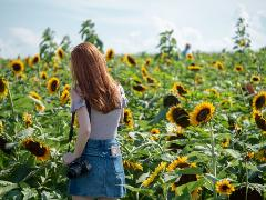 Sunset General Admission to Sunflower Fields (SAVE $5 vs gate price)