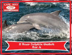 2 Hour Dolphin Watch for Four