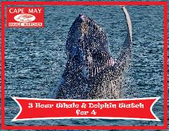 3 Hour Whale and Dolphin Watch for Four