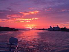 Sunset Dolphin Watch