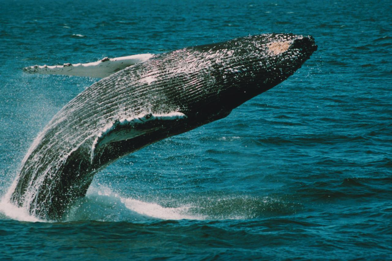 Whale & Dolphin Watch