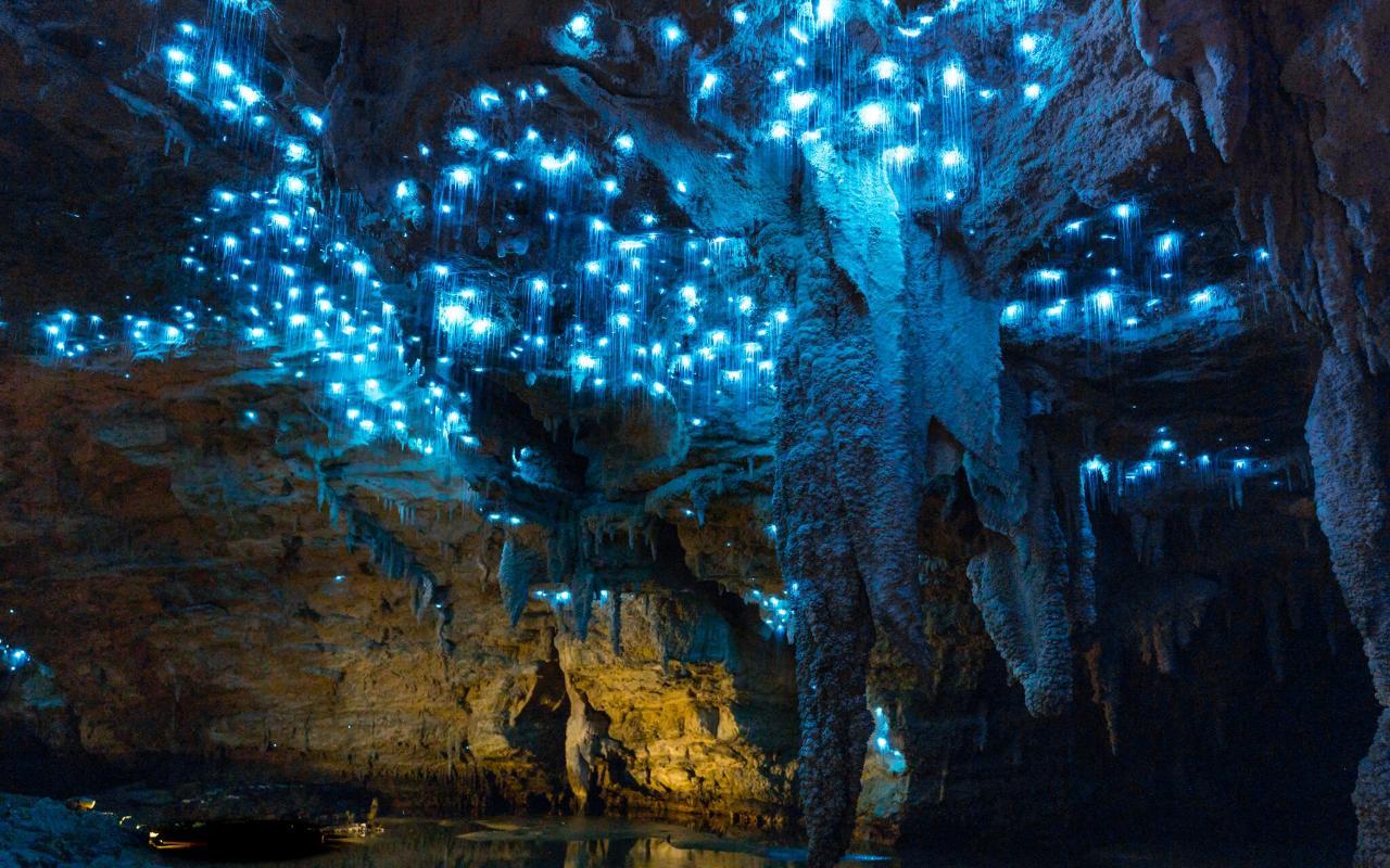 Auckland to Waitomo Caves and Hobbiton Movie Set Private Tour