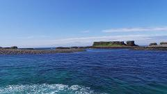 Wildlife cruise, Treshnish Isles and Staffa Tour 2018
