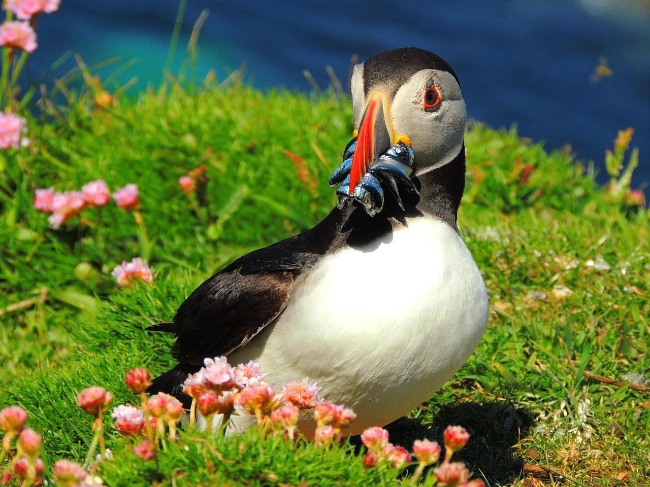 Staffa and Treshnish Isles Wildlife Tour