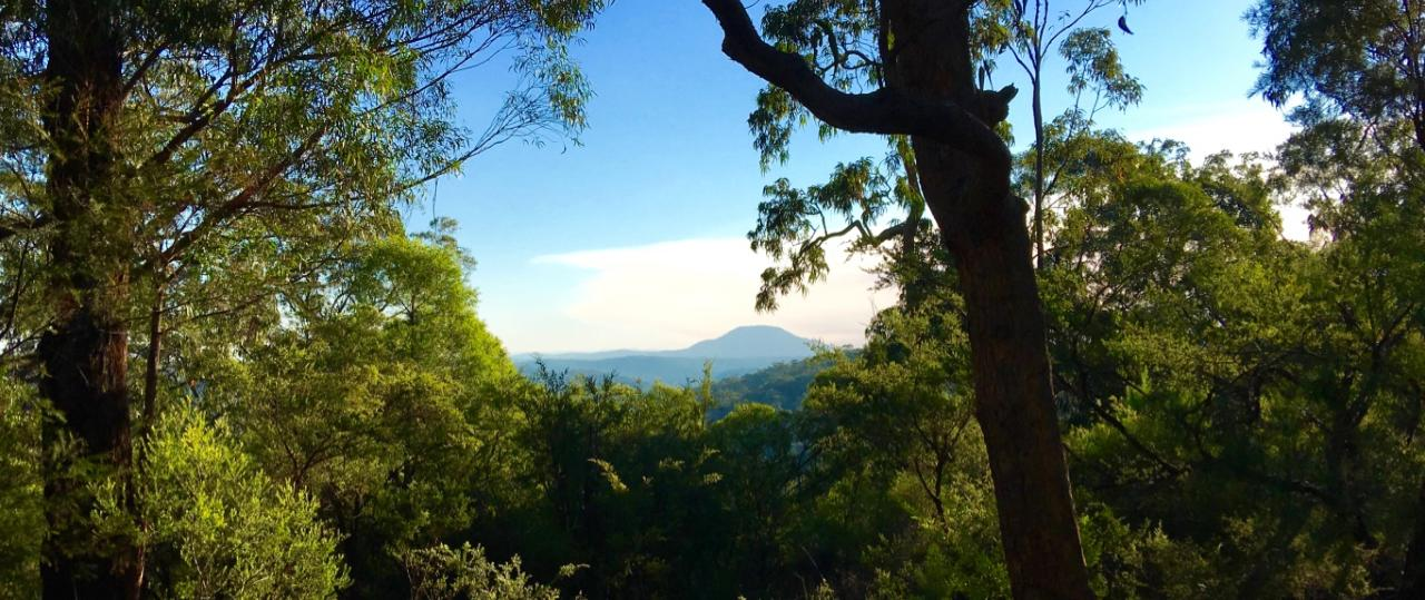 Yengo National Park Half-Day Guided Walk