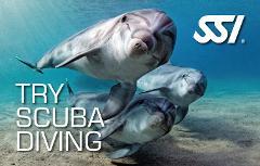 Try Scuba / Scuba Experience