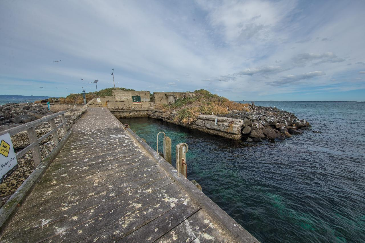Swim with seals and South Channel Fort Tour