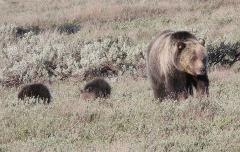 Yellowstone Full Day Tours for 4