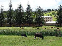 Norfolk Island History Lovers Tour ex Sydney